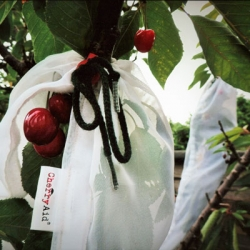 'Cherry Aid'® Branch Wraps (Pack of 2)