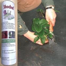 Slug & Snail Shocka! for strawberries