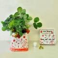 Strawberry Starter Kit