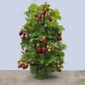 Strawberry Planter and Table-Top Offers