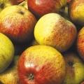 10% Off Cider Apple Trees
