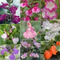 Buy Any 2 Perennials From Our 'Mix & Match' Range For Just £18 (*incl. p&p)