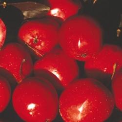 Crab Apple (Malus) 'Harry Baker'
