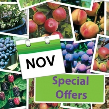 Save 10% On Selected Fruit Stocks
