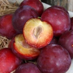 Cherry Plum 'Countess'