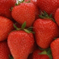 King Sized Pot Grown Strawberry 'Christine'* - Pack of 6 (Early)