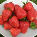 King Sized Pot Grown Strawberry 'Cupid'*  - Pack of 6 (Late Summer)
