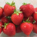 King Sized Pot Grown Strawberry 'Malling™ Champion'* - Pack of 6 (Perpetual)