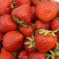 Strawberry 'Renaissance'* - Pack of 12 (Mid-Summer)