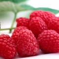 Raspberry 'Tadmor' (pack of 5 canes)