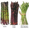 Mixed Asparagus Pack  (15 Crowns)