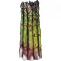 Asparagus 'Gijnlim' (pack of 10 crowns)